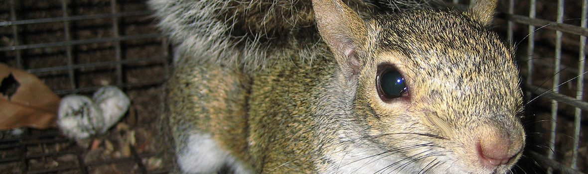 Preventing Rodents from Chewing on Your Car's Wires